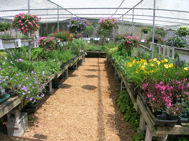 This is our sales area for sun perennials during the spring season.