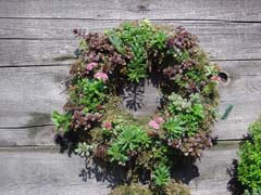 A Living Wreath